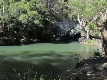 Kondalilla Falls swimming hole