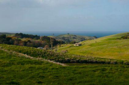 Motutapu landscape