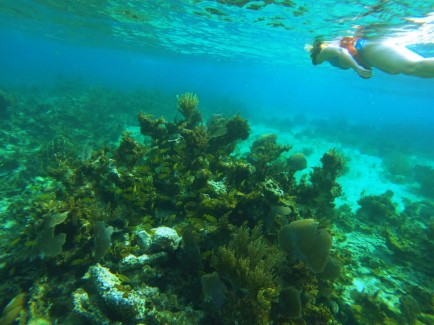 Coral reef, Negril Jamaica