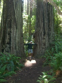 Pat between two Redwoods