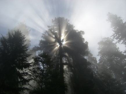 Redwoods and Sun