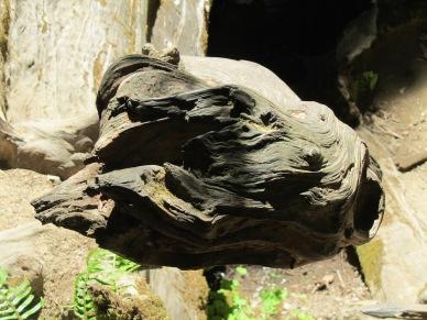 Redwoods driftwood