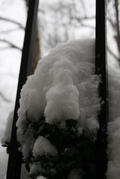 DC Snow 11