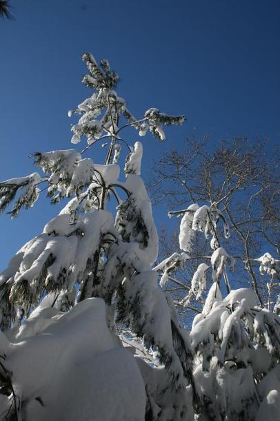 DC Snow 4