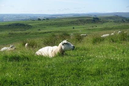 English country side near Hadrian's Wall